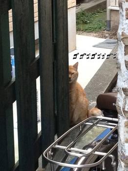 猫1.cng.jpg