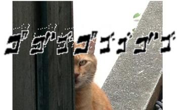 猫3.cng.jpg